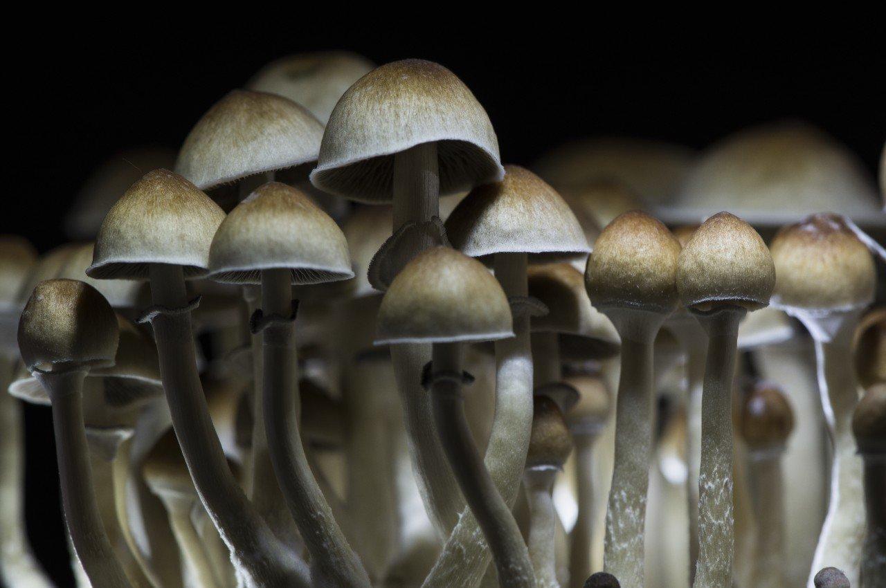 Après s'être injecté du thé aux champignons hallucinogènes, ils poussent dans son sang !