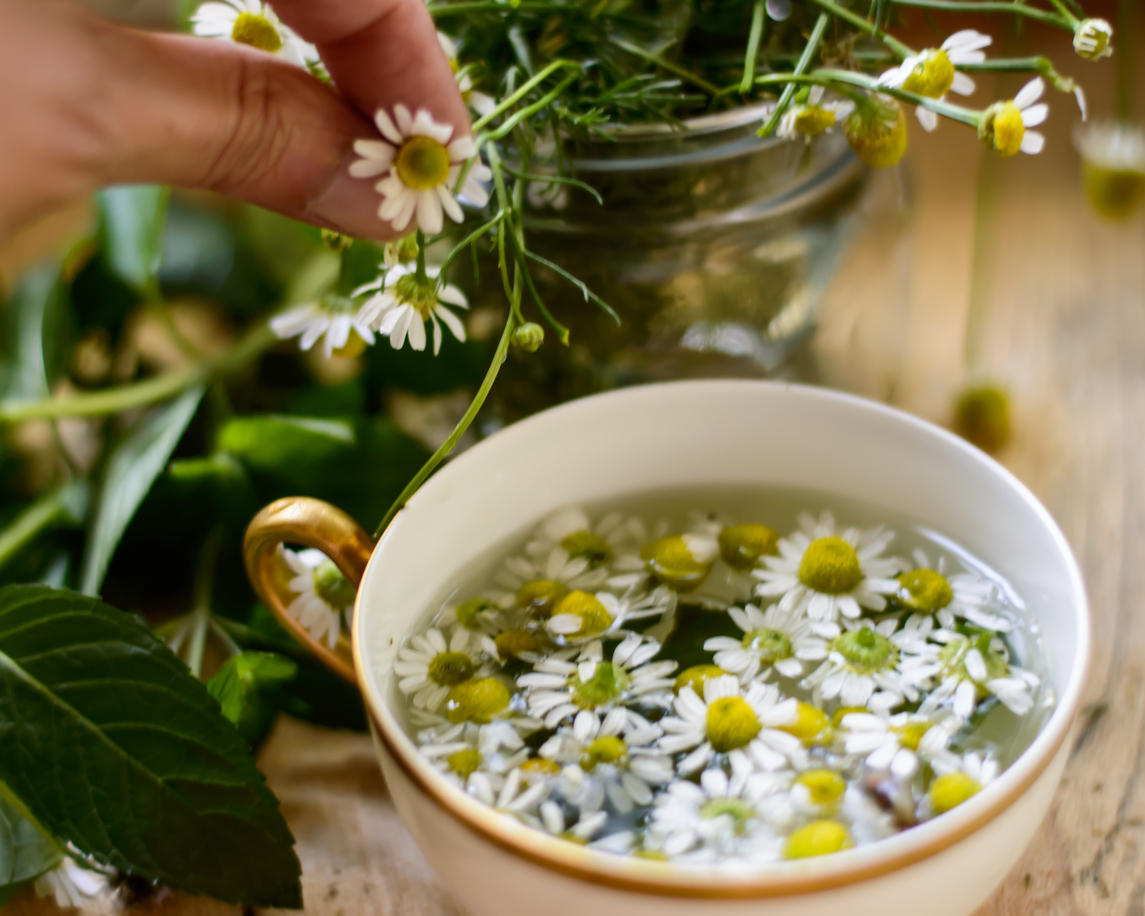 healthy living and organic lifestyle, woman making fresh chamomile tea (matricaria recutita) with chamomile flowers and m...