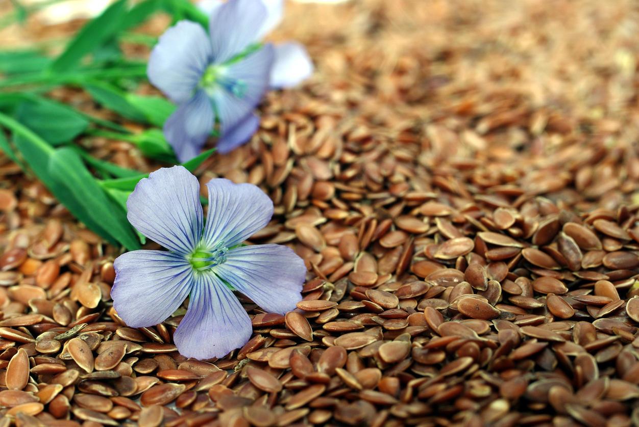 Graines de lin : un aliment pour maigrir   Medisite
