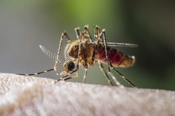 Un deuxième cas détecté en France — Chikungunya