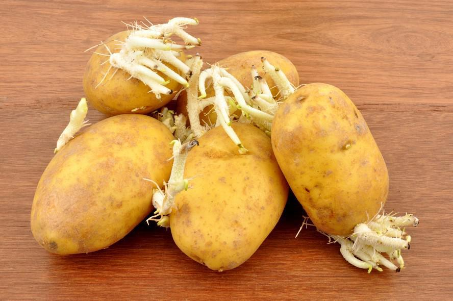 erreur 6 cuisiner des pommes de terre germ es 6 erreurs viter quand vous faites cuire vos. Black Bedroom Furniture Sets. Home Design Ideas