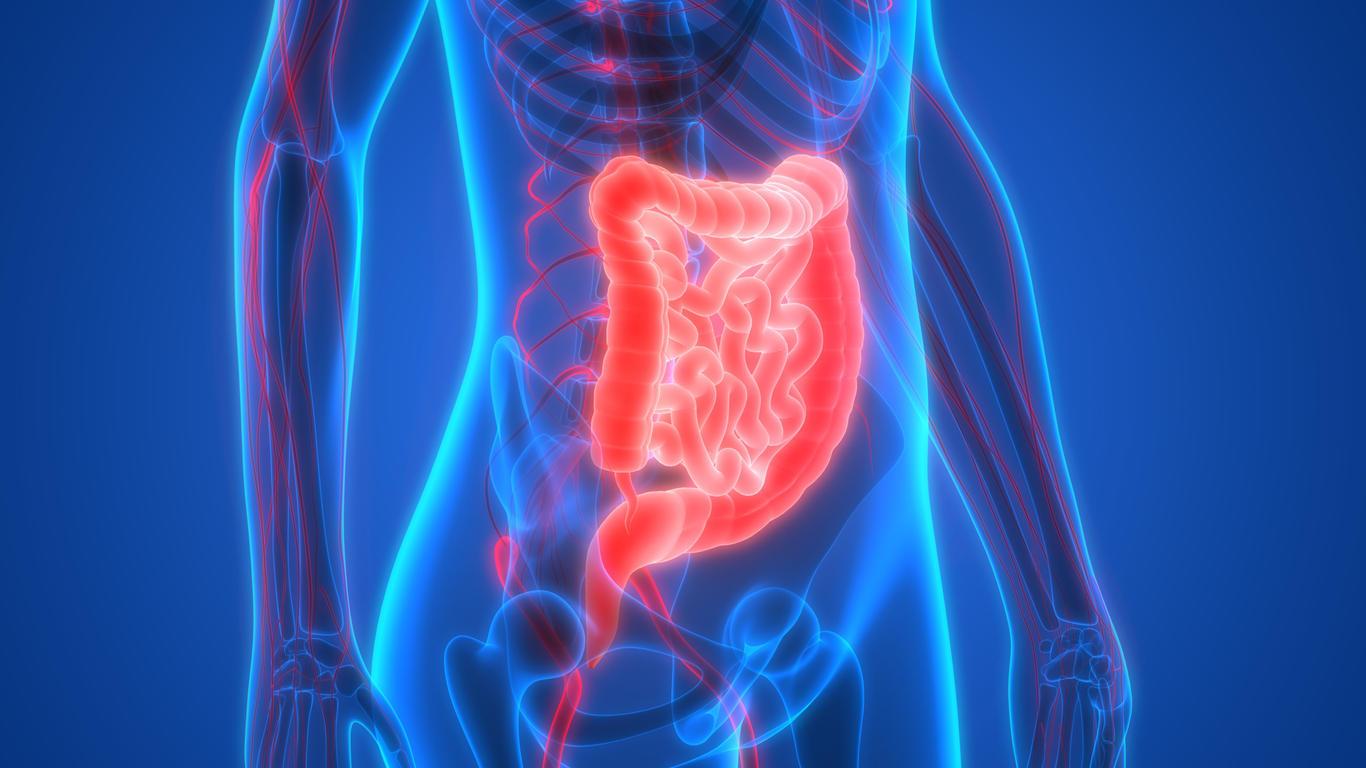 Alzheimer : nos intestins responsables de la maladie ?