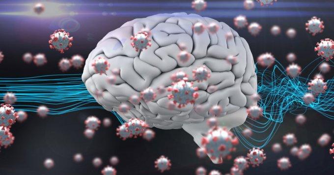Alzheimer : le coronavirus affecterait la protéine tau