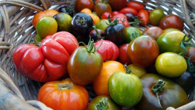 La tomate, anti-inflammatoire naturel