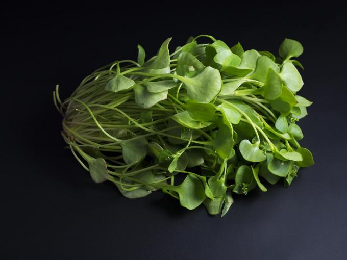 bundle of fresh green purslane isolated on black background