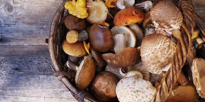 Champignons : peu caloriques et pleins de minéraux ...
