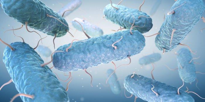 Bactéries mangeuses de chair : les endroits où vous pouvez les attraper
