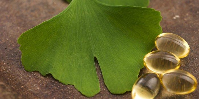 Ginkgo Biloba Feuille | Effets secondaires - Santé par les plantes - Exclusif