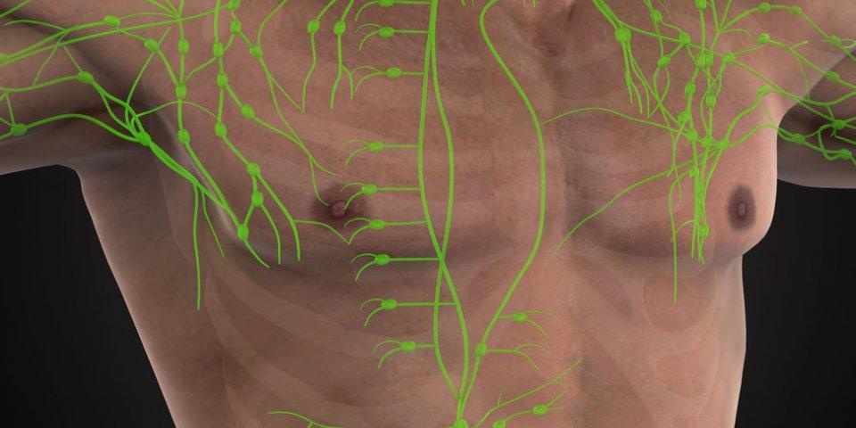 Adénopathie (ganglions lymphatiques gonflés) : définition, symptômes et traitements