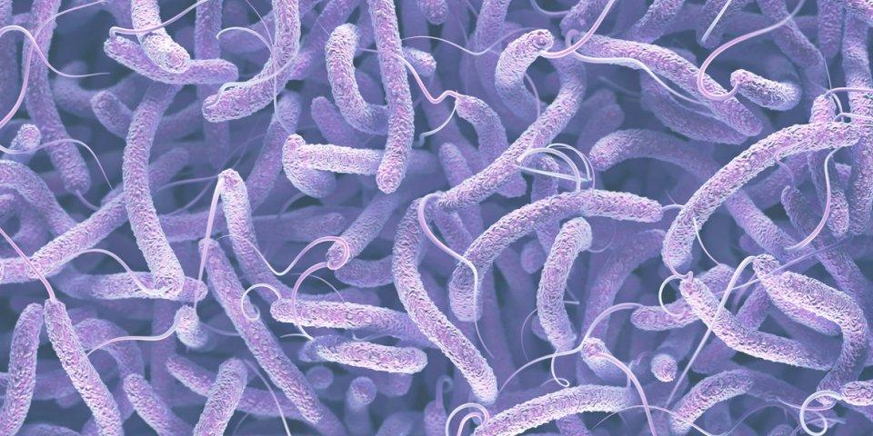 vibrio cholerae, gram-negative bacteria 3d illustration of bacteria with flagella
