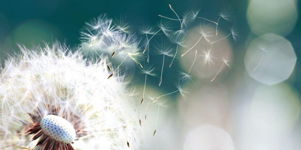 Allergie au pollen : symptômes, traitements, éviter les crises