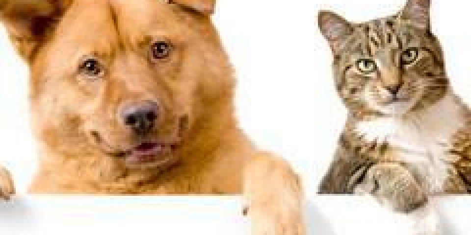 colliers antiparasitaires pour animaux retirés du marché