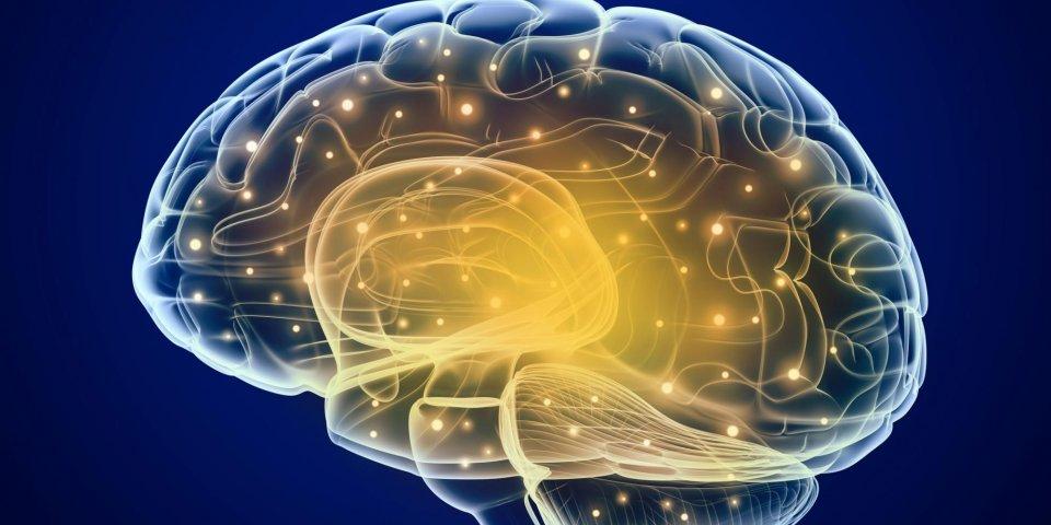 AVC : le venin d'une araignée mortelle aiderait à réduire les lésions cérébrales