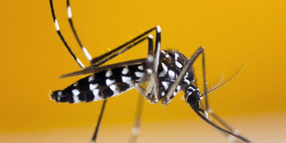 Dengue : 700 cas en une semaine à la Réunion