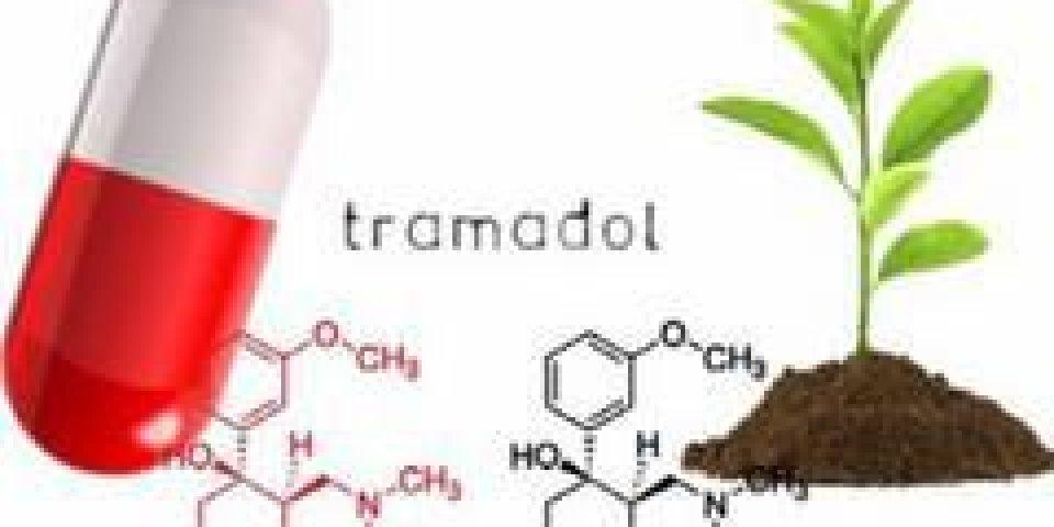 Douleur : découverte d'une plante aussi efficace que le Tramadol !