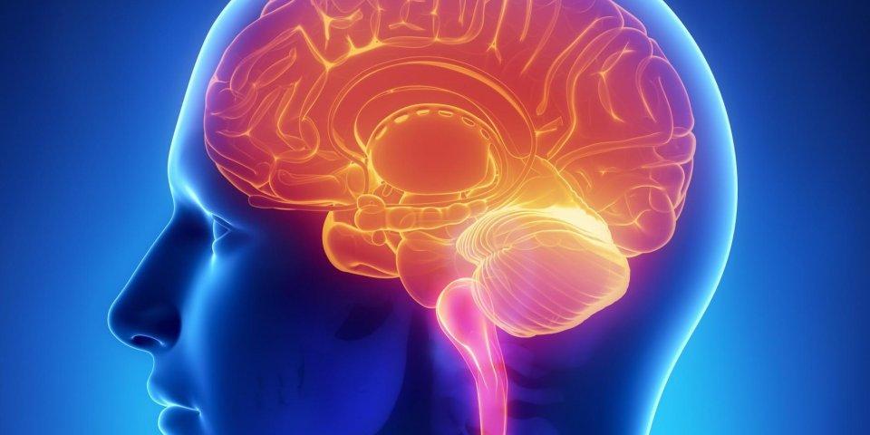 Ataxie de Friedreich : symptômes, espérance de vie, thérapie génique