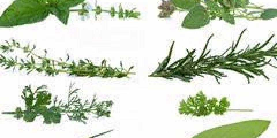 Plantes aromatiques: quelles vertus santé?