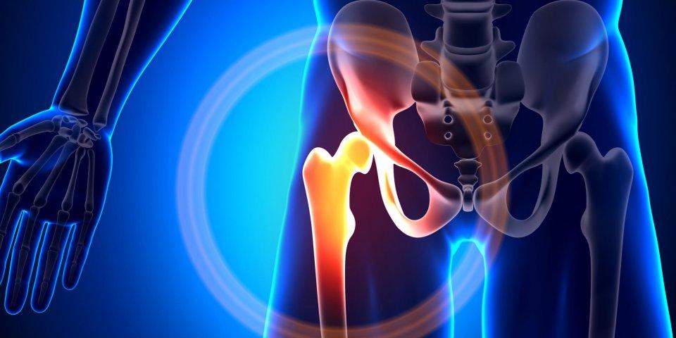 articulation de la hanche - os de l'anatomie