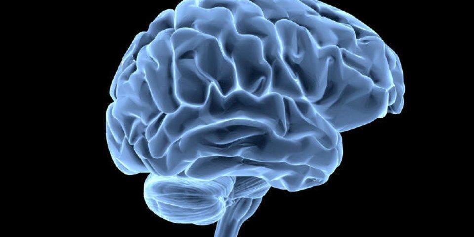 modèle de cerveau xray look isolé sur fond blanc