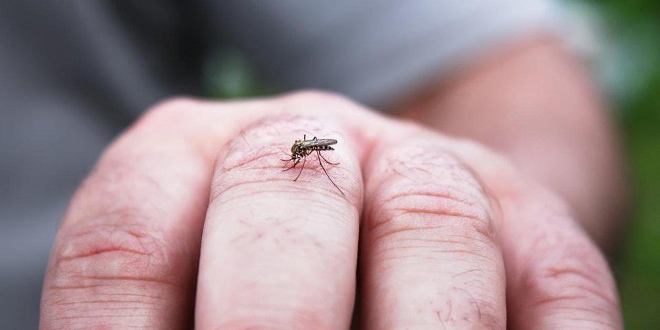 Piqûre d'insecte et gonflement : est-ce dangereux ?