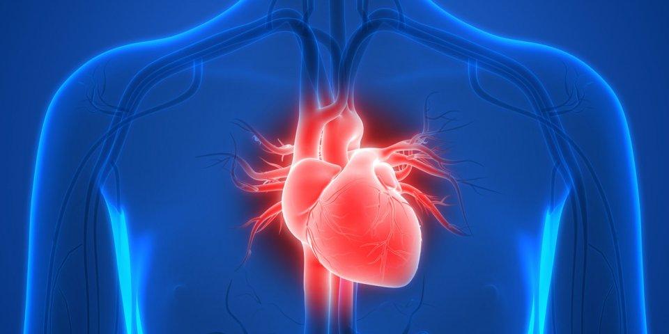 Covid-19 : des autopsies de malades révèlent de surprenants dommages sur le cœur