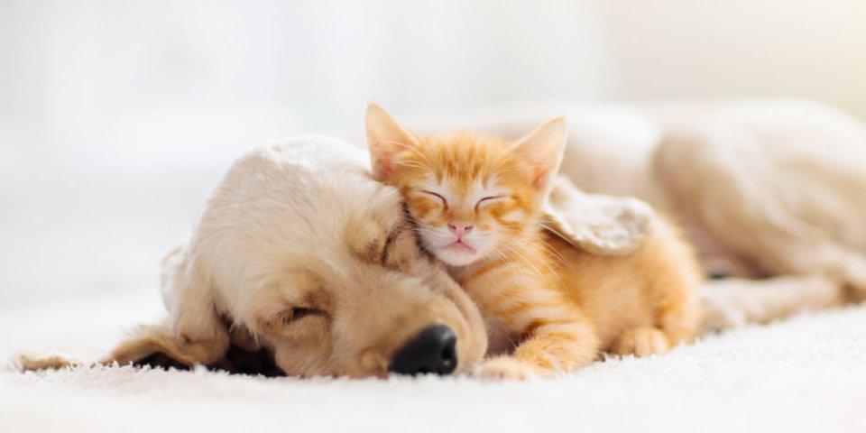 Vacances : Comment gérer la séparation avec son animal ?