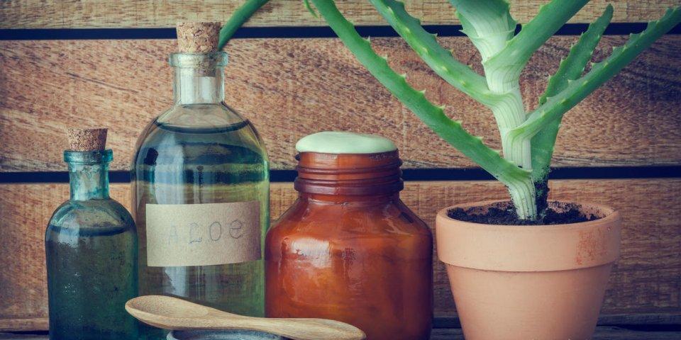plante d'aloès en pot de fleurs, bouteille d'essence d'aloe vera bio, crème ou onguent et autres produits sur la table ...