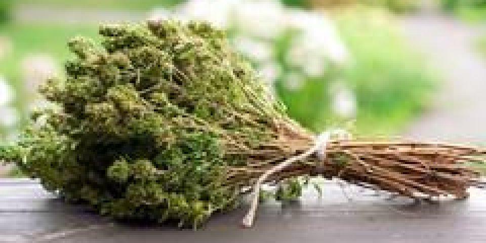 Thym : un remède naturel miracle !
