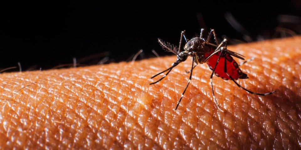 Nouveau cas de dengue : démoustication à Villeurbanne et Mions (Rhône)