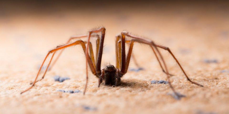 (Photo) A 60 ans, il frôle l'amputation du bras après une morsure d'araignée