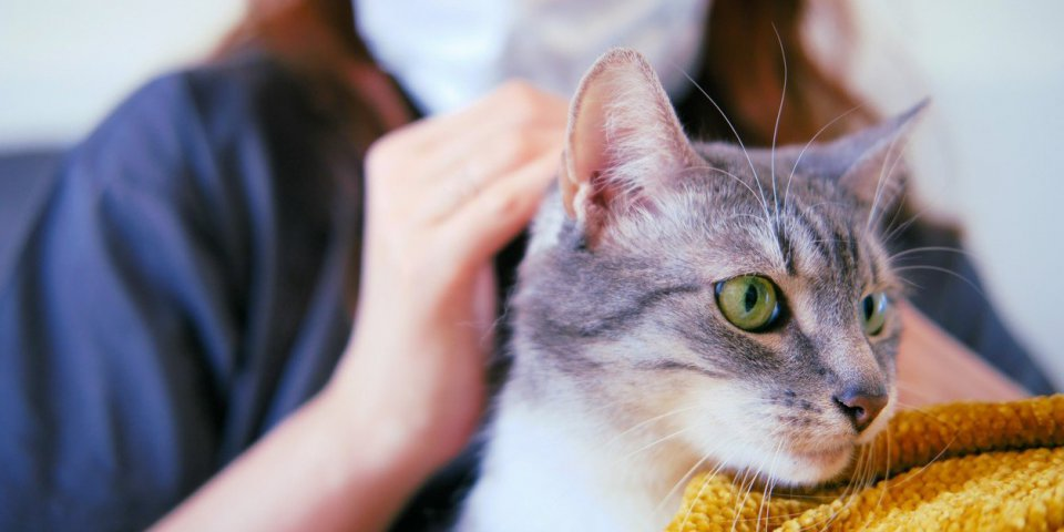 Un antiviral utilisé chez le chat pourrait agir contre le Covid-19 humain !