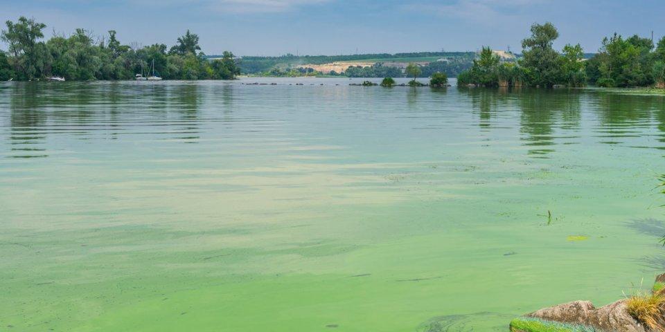 Cyanobactéries : la baignade désormais interdite dans cette rivière d'Ardèche