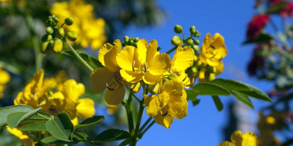 6 plantes laxatives dangereuses pour la santé