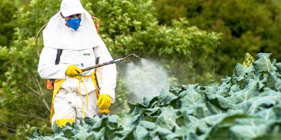 Pesticides : les fruits et les légumes les moins contaminés