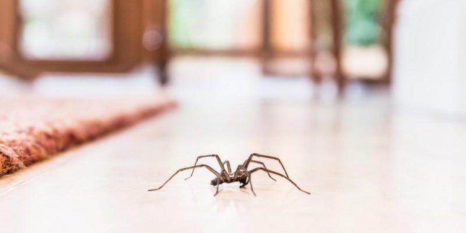 Araignées : 8 remèdes naturels pour les faire fuir de la maison