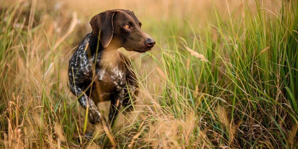 Épillet chez le chien ou le chat : les signes qui doivent alerter