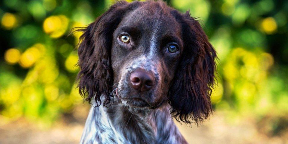 Masque : un adorable chien vous rappelle comment bien le porter
