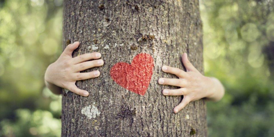 Vivre près des arbres aide à prévenir les dommages vasculaires liés à la pollution