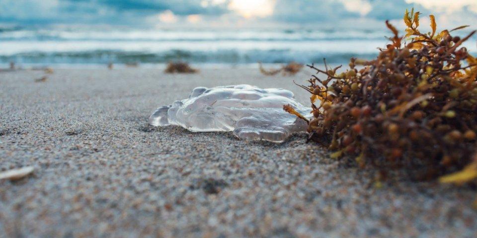 Oursin, vive, méduse... Que faire en cas de piqûre ?