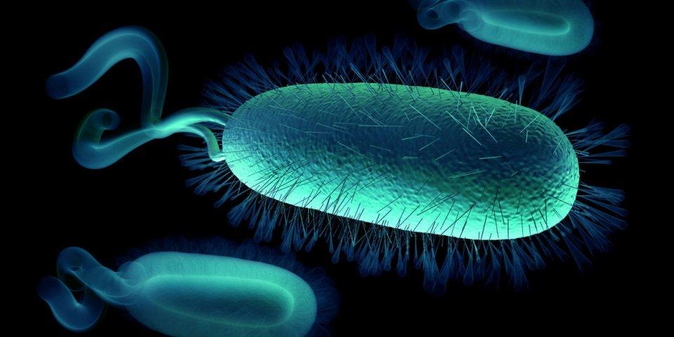 La liste noire des pires nids à microbes qui se cachent chez vous