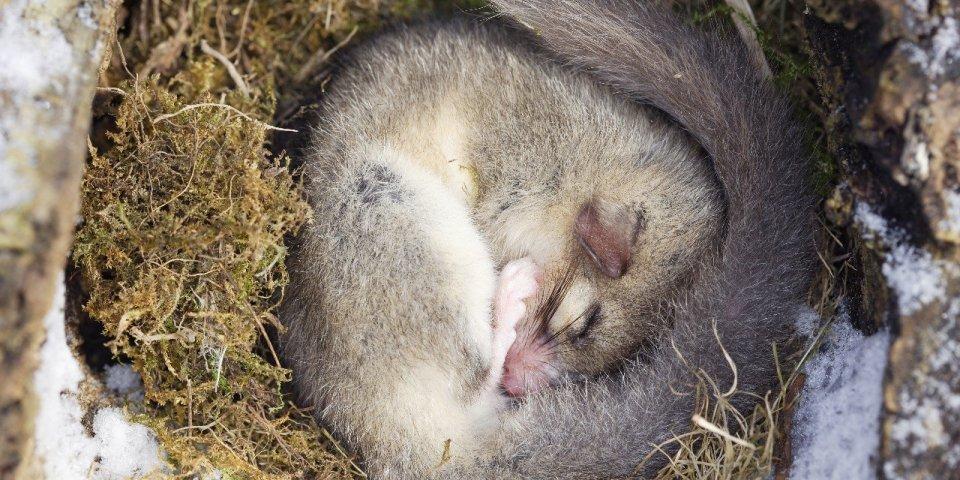 Les êtres humains peuvent-ils aussi hiberner pour survivre au froid ?