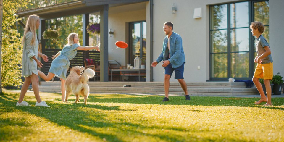 smiling beautiful family of four play fetch flying disc with happy golden retriever dog on the backyard lawn idyllic fami...