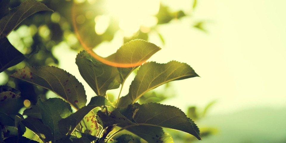 La vitamine D : rôles et principaux bienfaits