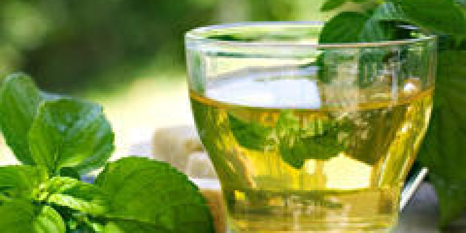 La menthe, une plante aromatique magique