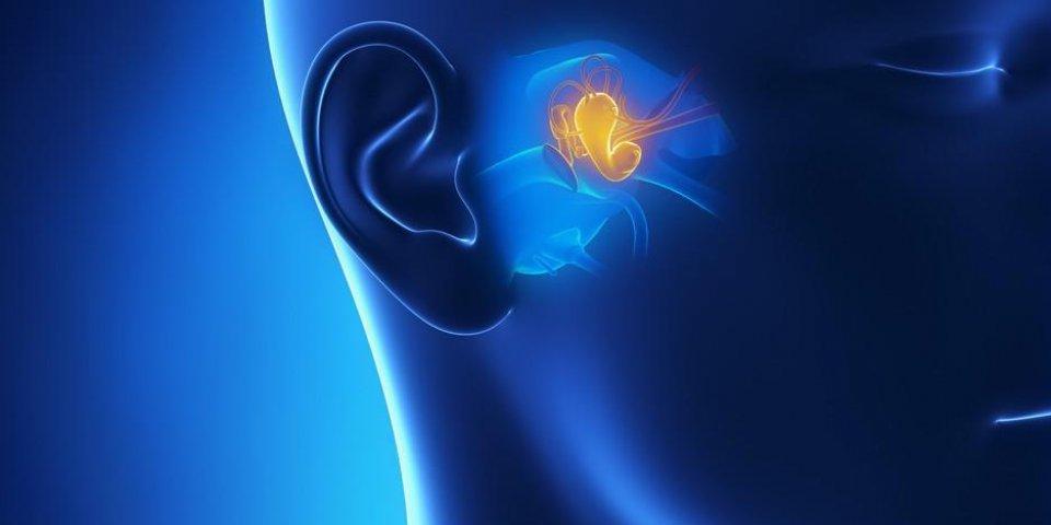 l'anatomie de l'oreille moyenne en 3d