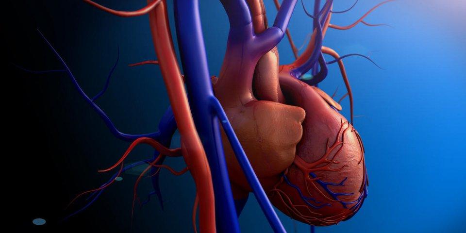 Maladie cardiaque: qu'est-ce qu'une myocardite?