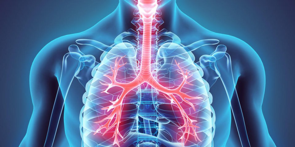 Asthme : les anomalies dans les poumons seraient héréditaires selon une étude