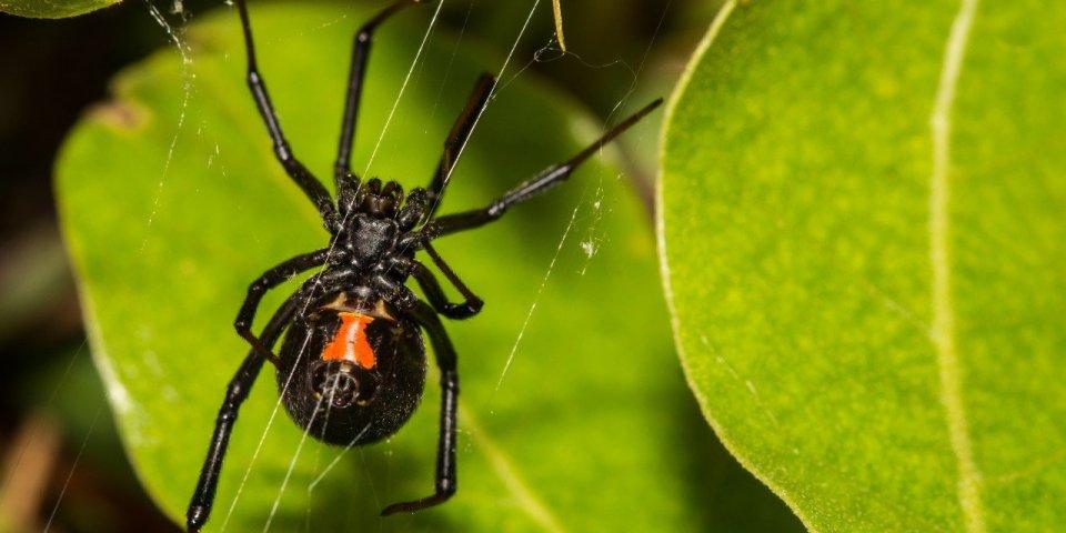 Photo : elle frôle la mort à cause d'une morsure d'araignée