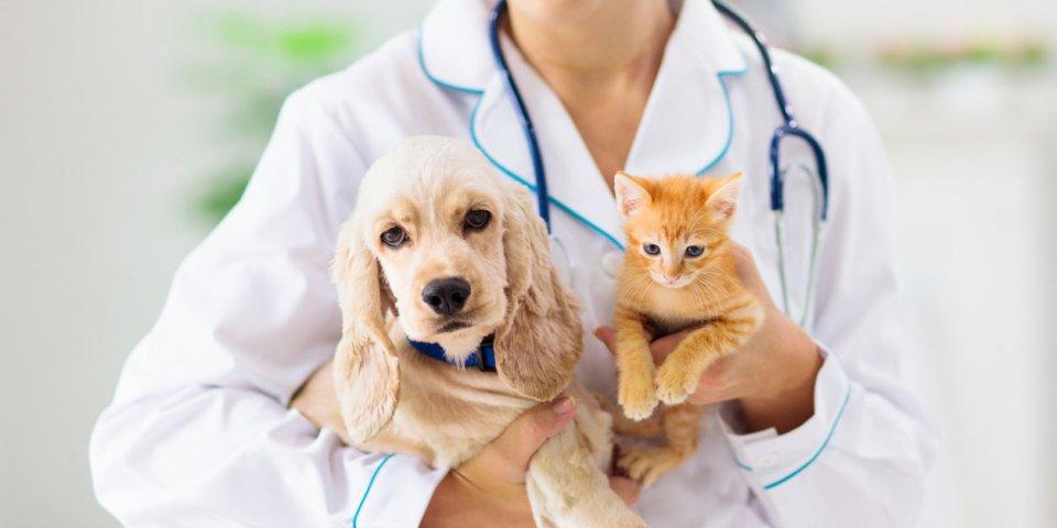 Coronavirus : les animaux de compagnie peuvent attraper le variant anglais