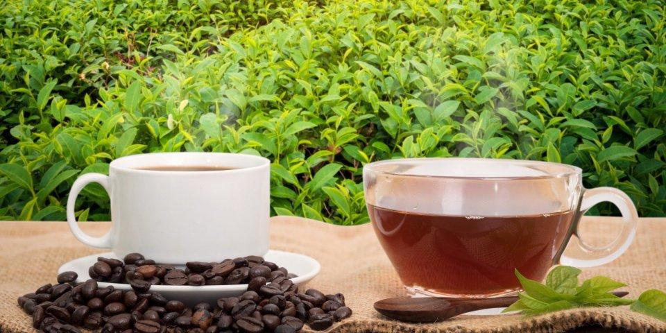 Diabétiques : boire du thé vert et du café pourrait allonger leur durée de vie